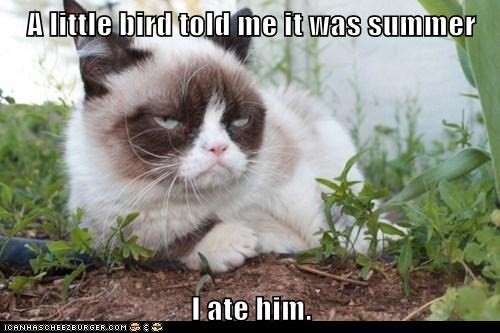 A little bird told me it was summer I ate him.
