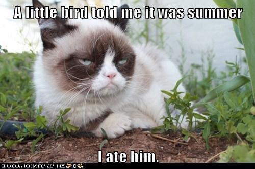 Grumpy Cat,little birdy,summer,funny