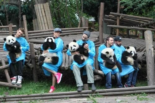 backstreet boys Music panda funny - 7521591808