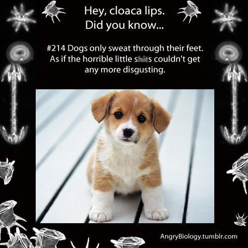 dogs gross cute science biology funny - 7522011904