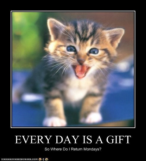 gift,kitty,mondays,funny,money