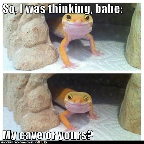 smooth lizard funny - 7522324224