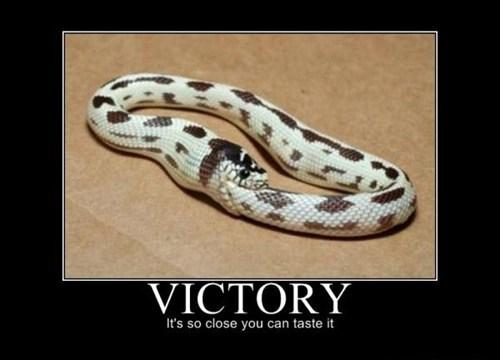 ouroboros eat tail funny snake - 7522387200