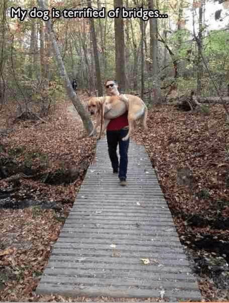 pets bridge funny - 7522471680