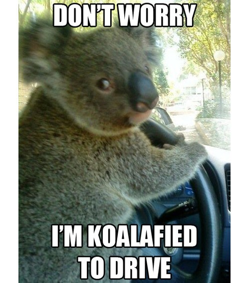 koalafications,pun,driving,funny