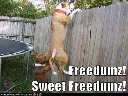 Freedumz! Sweet Freedumz!