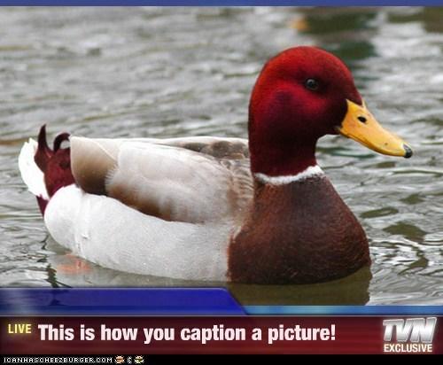 Cheezburger Image 7522930944