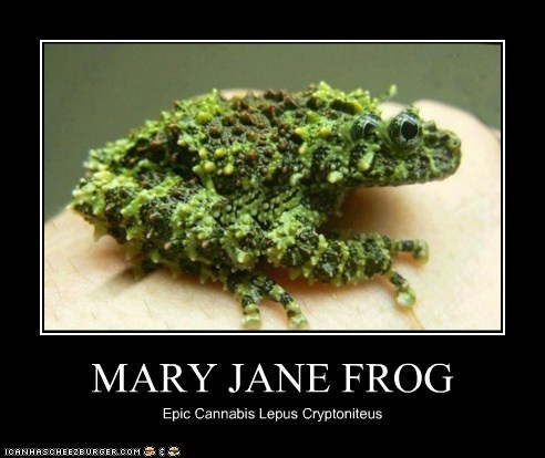 MARY JANE FROG Epic Cannabis Lepus Cryptoniteus