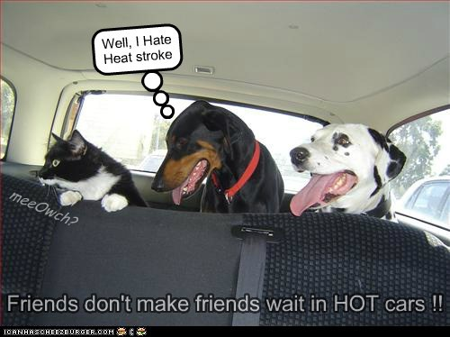 Friends don't make friends wait in HOT cars !! Well, I Hate Heat stroke meeOwch?