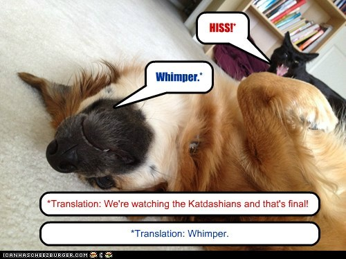 HISS!* Whimper.* *Translation: We're watching the Katdashians and that's final! *Translation: Whimper.