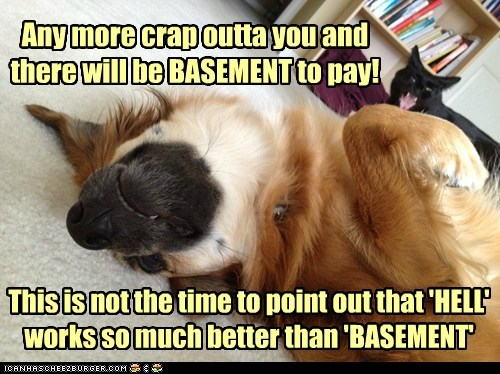 basement cat dogs Cats funny - 7527869440