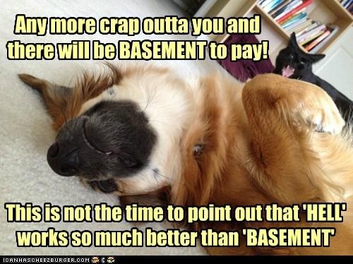 basement cat Cats funny - 7527869440