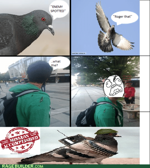 pigeon mission accomplished pooping funny - 7529959936