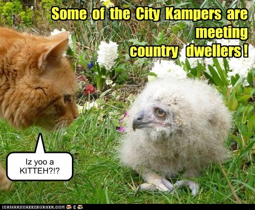 Some of the City Kampers are meeting country dwellers ! Iz yoo a KITTEH?!?