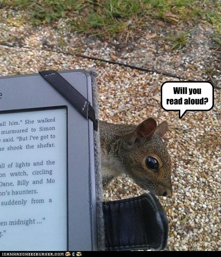 ebook,reading,squirrel,cute