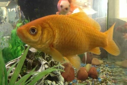 photobomb fish funny - 7531102208