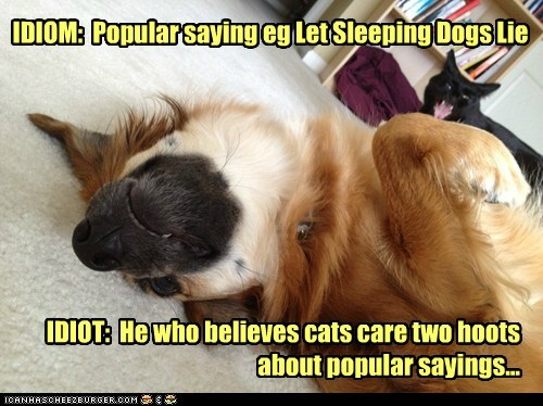 IDIOM: Popular saying eg Let Sleeping Dogs Lie IDIOT: He who believes cats care two hoots about popular sayings...