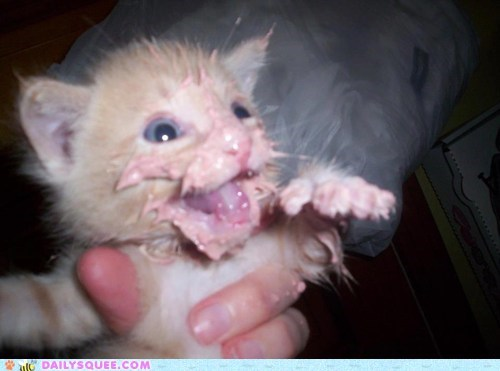 cat baby kitten food - 7531847936