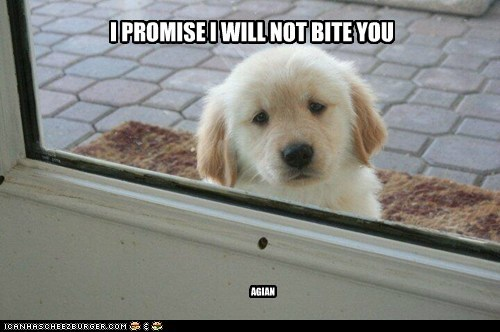 I PROMISE I WILL NOT BITE YOU