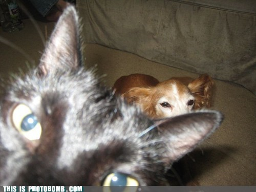 photobomb dogs Cats funny - 7533428736