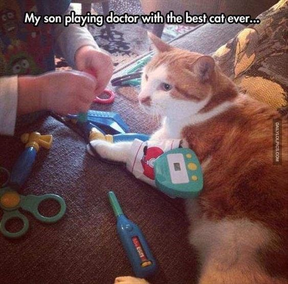 child and cat playing doctor