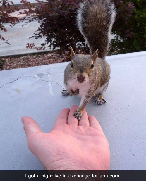squirrel,high five