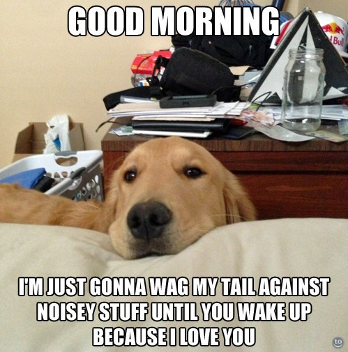 wake up good morning noisy funny - 7533724672