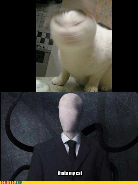 Cats funny slenderman - 7533988608