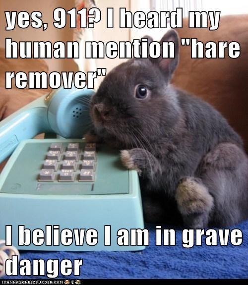 hair hare pun phone bunny - 7534092288