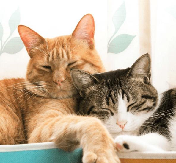 napping Cats catnap - 753413