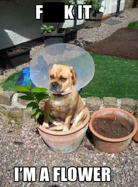 identity crisis,cone of shame,Flower,funny