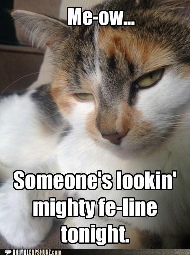 cat pun funny - 7534258432