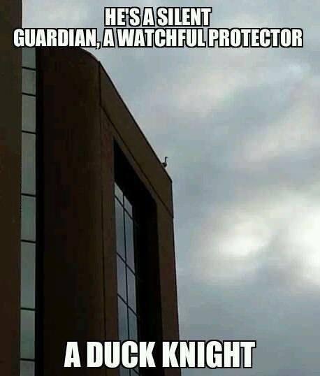 duck pun batman the dark knight funny - 7534365952