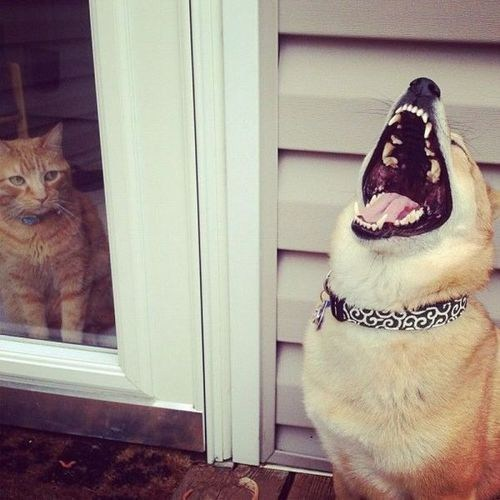 dogs laugh outside Cats funny - 7534474240