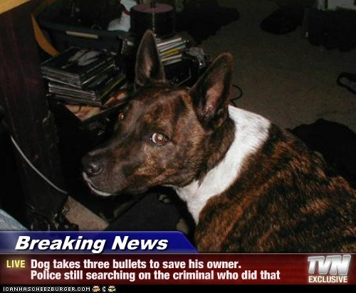 Breaking News - Dog takes three bullets to save his owner. Police still searching on the criminal who did that
