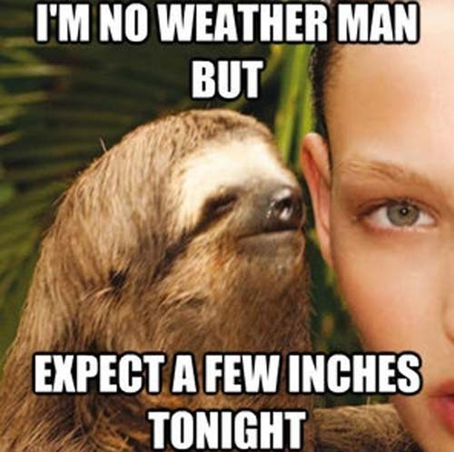 innuendo jokes sloths - 7534765568