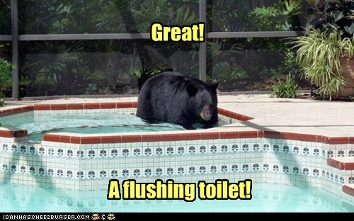 Great! A flushing toilet!
