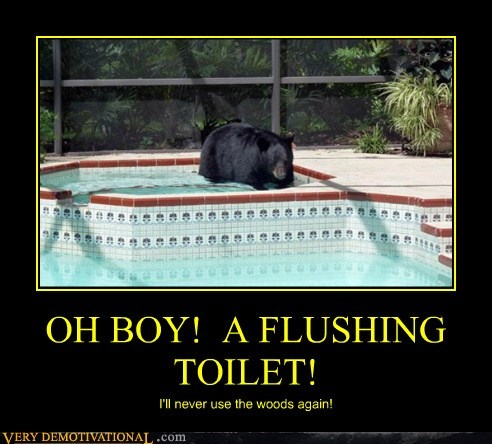 bad idea,bear,toilet,funny