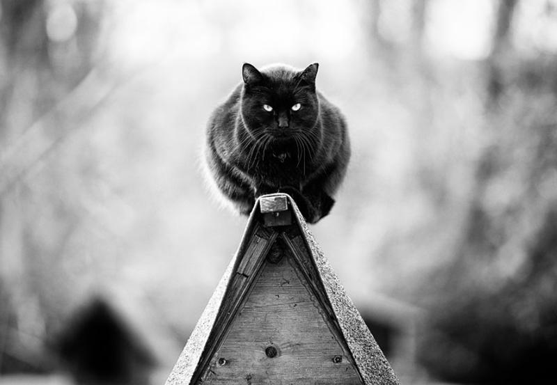 photography photos Cats - 7534853