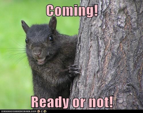 squirrrel cute hide and seek - 7534857216