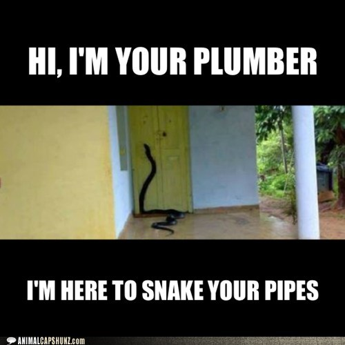 HI, I'M YOUR PLUMBER and im here to snake your pipes