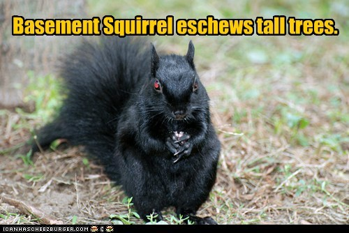 Basement Squirrel eschews tall trees.