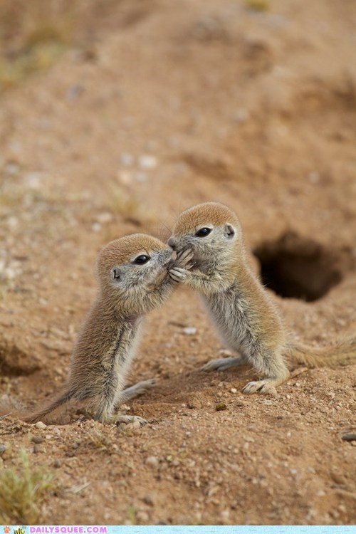 baby,squirrels,kissing