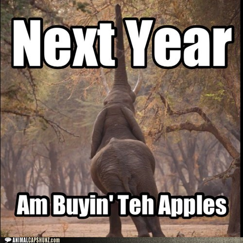 elephant apples funny stretch - 7536867328