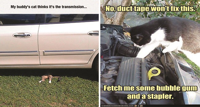 memes of animals doing mechanics stuff as if they are experts in auto repairs