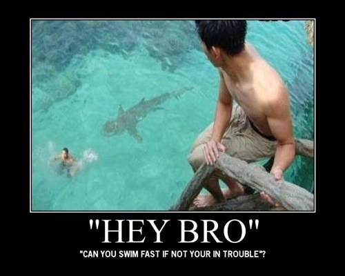 bro swim shark trouble funny - 7536949248