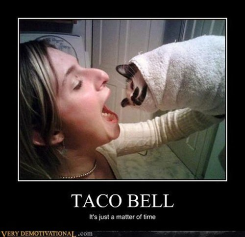 cat,taco bell,food,funny