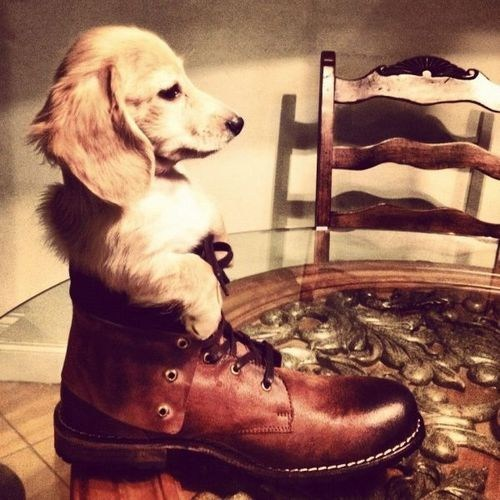 puppy cute boot - 7537165824