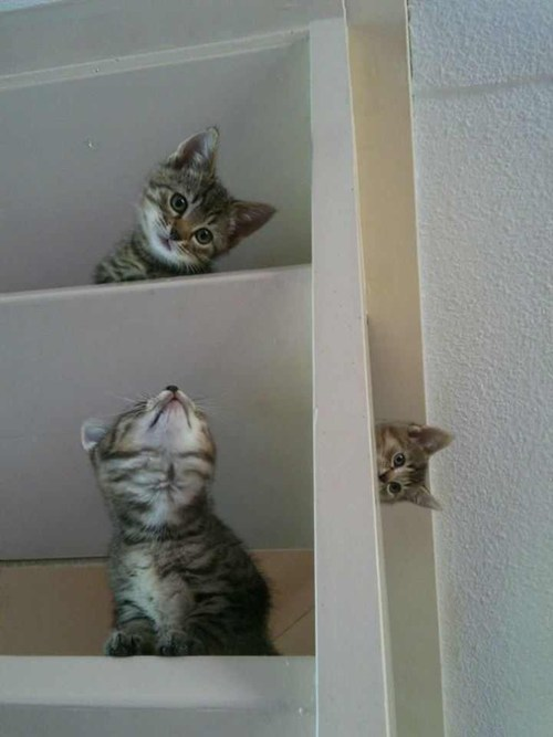 mc escher,kitten,funny