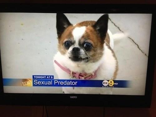 dogs news news headlines funny monday thru friday g rated - 7537283328